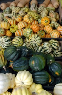 assortment of winter squashes