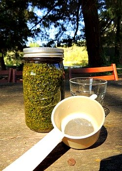 15 fat burning foods - nettles infusion